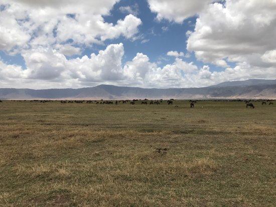 Arusha, Tanzania: photo3.jpg