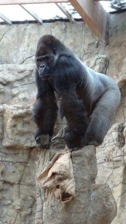 Zoo Schmiding: Danke, dass du keinen Blitz verwendet hast!