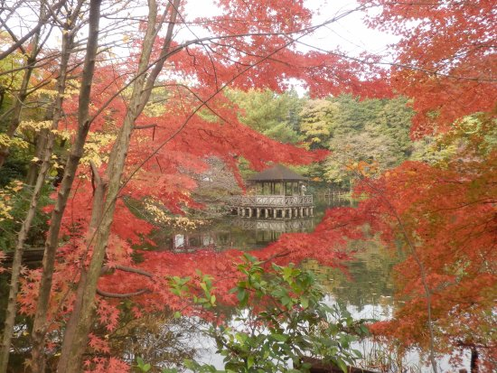 Shakujii Park: 昨年11月末に撮影したものです。