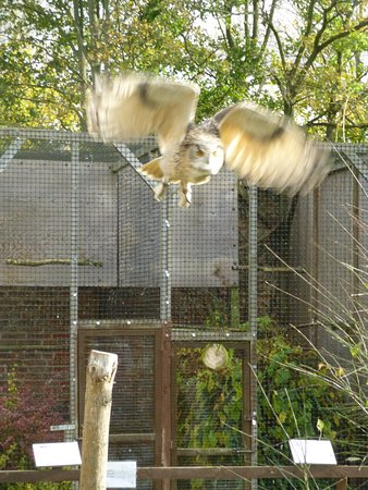 Bedale, UK: owl display