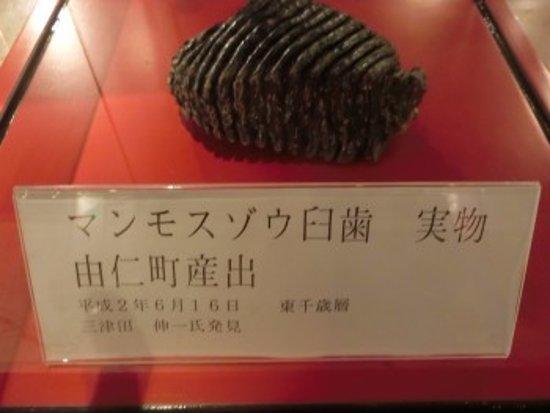 Yuni-cho, Japão: 化石展示