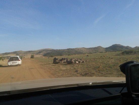 Parque Nacional Pilanesberg, Sudáfrica: такого быть не должно!!!