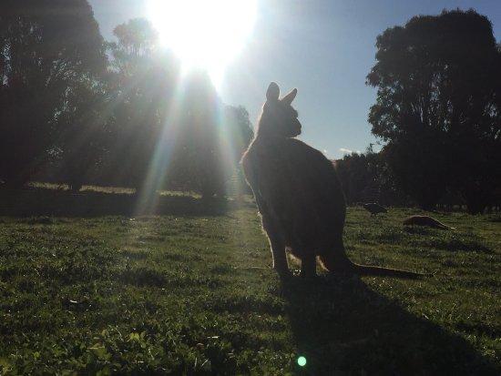 คิงส์คอต, ออสเตรเลีย: photo6.jpg