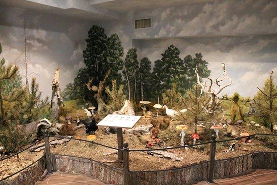 Μουσείο Φυσικής Ιστορίας & Μουσείο Μανιταριών Εικόνα
