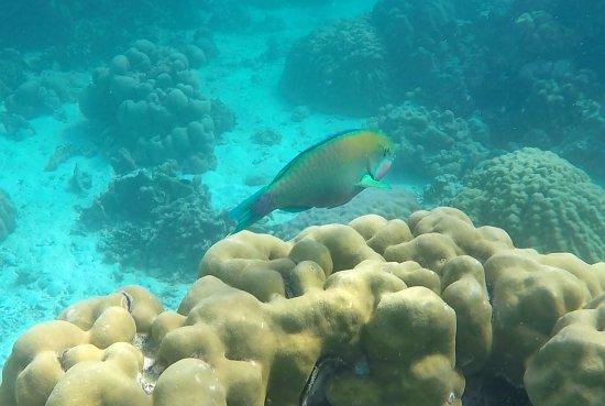 Khuraburi, Tailandia: Snorkelling 7