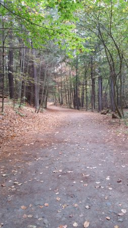 Greenfield, MA: Morning walk in Temple Woods behind Brandt House.