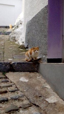 Calle de Igualeja con gatos.