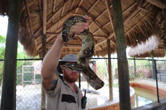 Everglades Safari Park: photo2.jpg