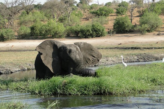 Chobe River Boat Cruises Kasane All You Need To Know