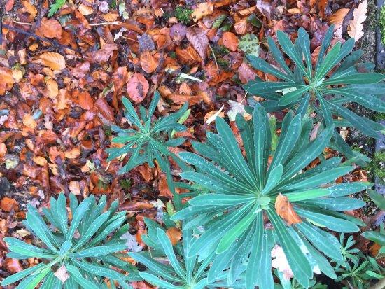 The Botanical Gardens: photo3.jpg