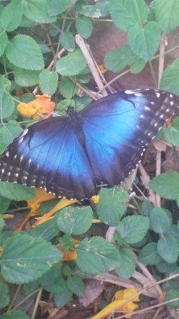 'TripAdvisor' from the web at 'https://media-cdn.tripadvisor.com/media/photo-s/11/34/d9/f2/the-butterfly-habitat.jpg'