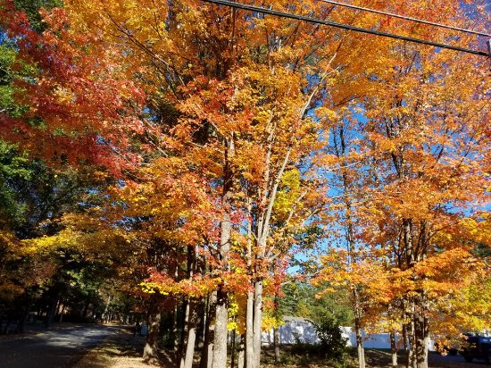 Ashland, NH: 20171018_160818_large.jpg