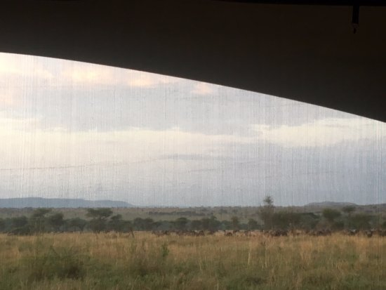waking to the sound of wildebeest and zebra in the morning