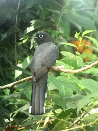 Nicoya, Costa Rica: photo2.jpg