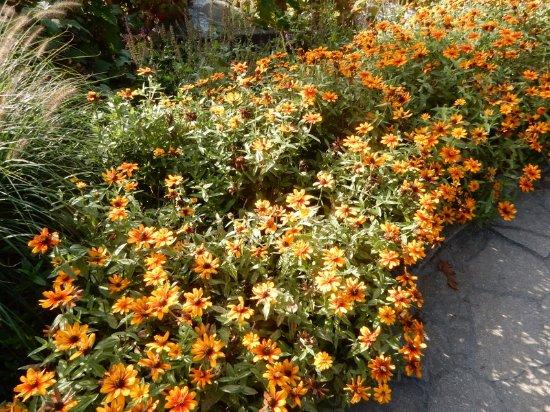 Coastal Maine Botanical Gardens: Beautiful borders