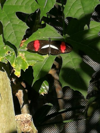 Butterfly Rainforest Picture