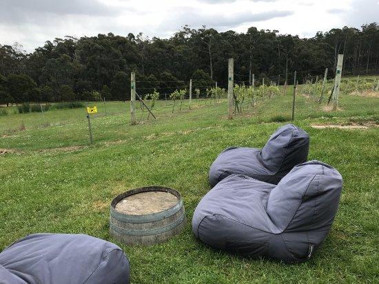 Bruny Island Premium Wines: photo2.jpg