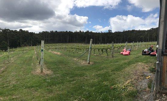 Bruny Island Premium Wines: photo3.jpg