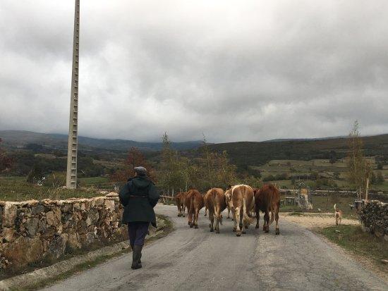 Pitoes das Junias, البرتغال: Pitões (trânsito)