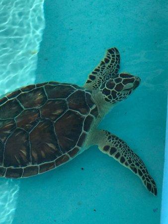 Palm Beach Shores Resort & Vacation Villas: photo5.jpg