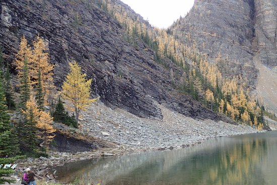 Lake Agnes Tea House: Larch trees turn yellow