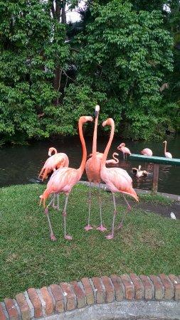 Sarasota Jungle Gardens: IMG_20171103_141537921_HDR_large.jpg