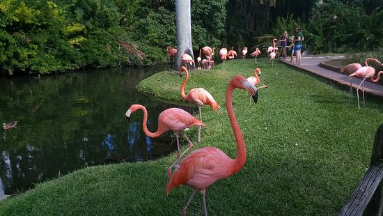 Sarasota Jungle Gardens: IMG_20171103_140546867_large.jpg