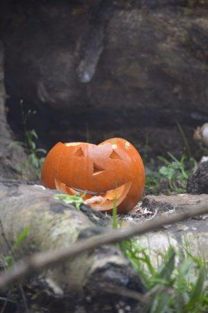 Woodland Park Zoo: pumpkin days