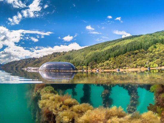 Havelock, New Zealand: Mussel farm