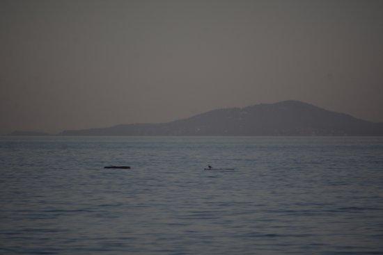 Edmonds, WA: Whales
