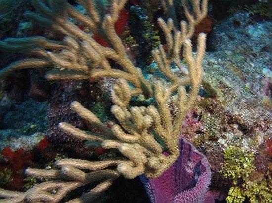 Scuba Club Cozumel : Palancar reef