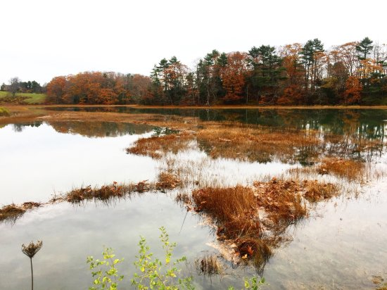 Wolfe's Neck Woods State Park Photo