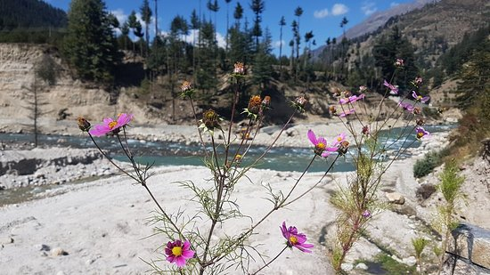 Banjara Camp &  Retreat - Sangla Valley Camp: 20171014_110727_large.jpg