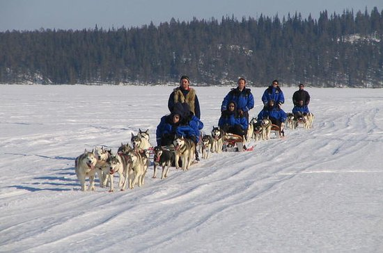 Lapland Thrill of Speed: Safári Husky...