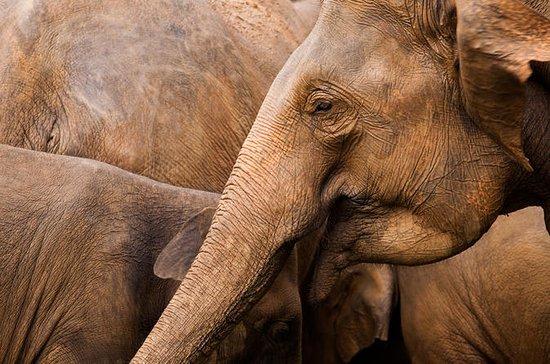 All Inclusive Minneriya Elephant Safari, Sigiriya & Dambulla Day Trip...