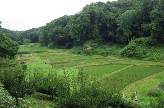 Hike and Explore Japan's Nature Trails