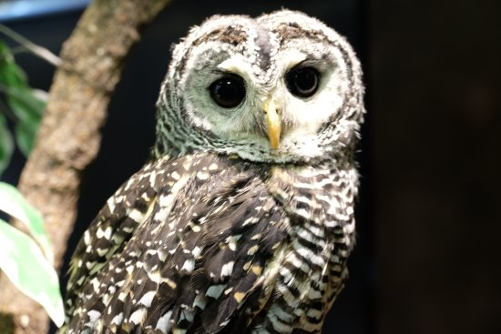 Owl Family Kyoto