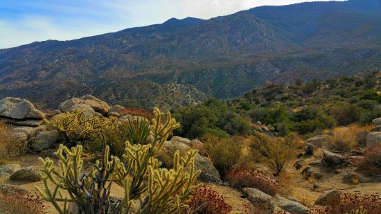 Mountain Center, Kaliforniya: Cahuilla Tewanet Scenic Overlook