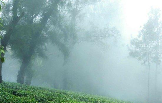 Kuttikkanam, Hindistan: IMG-20171108-WA0003_large.jpg