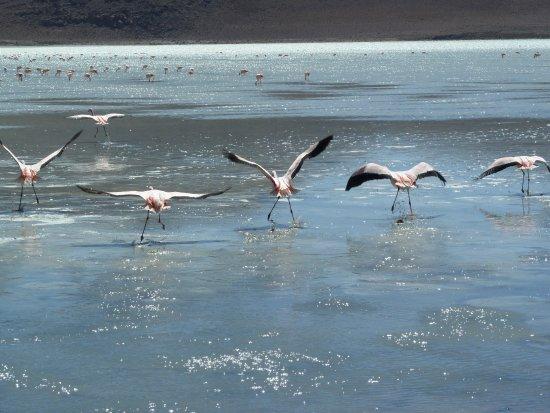 Laguna Canapa: Flamingo-Paradies (2)