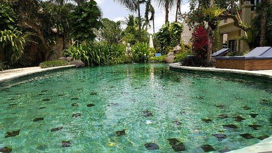 Samhita Garden: 20171108_124609_large.jpg