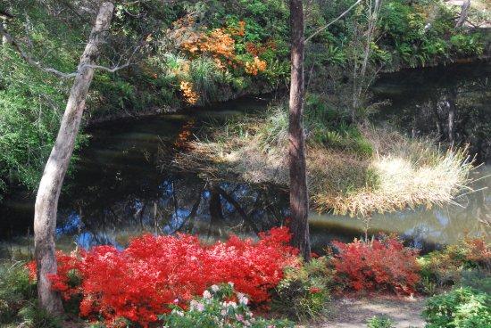 Blackheath, Australia: Campbell Rhodo gardens