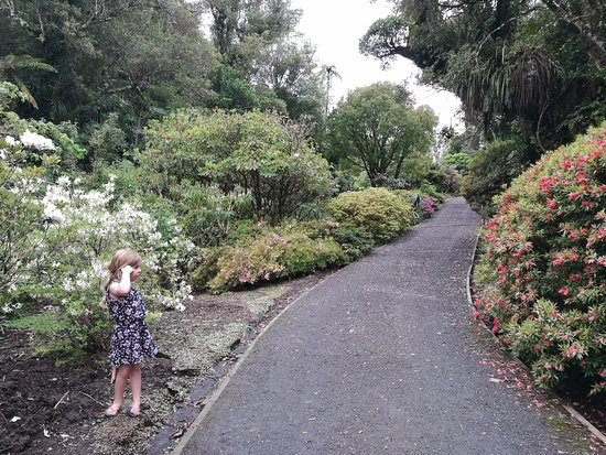 New Plymouth, New Zealand: On the rhododendron route