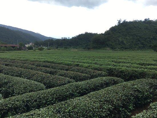 Eshan Tea Garden
