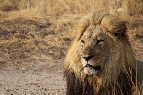 Savute Safari Lodge: photo5.jpg