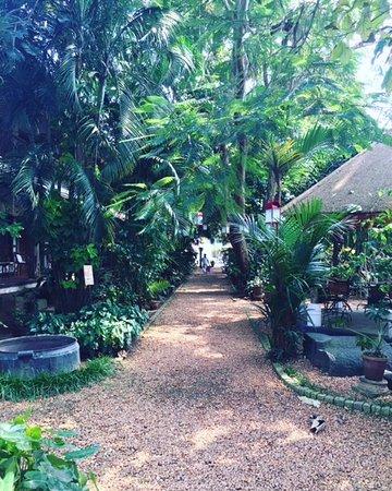 Fort House: lovely garden