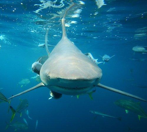 Shark Cage Diving KZN: photo1.jpg