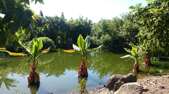 Bild von palmetum santa cruz jard n botanico for Jardin principal location