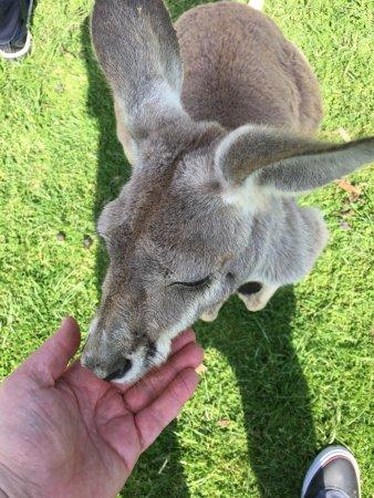 Phillip Island Wildlife Park: photo0.jpg