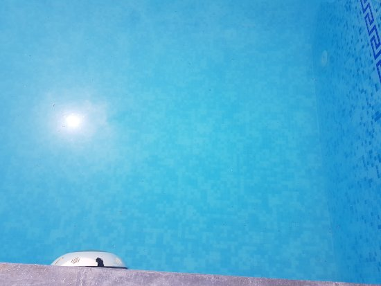 Best Western Merrion : Insects in the pool